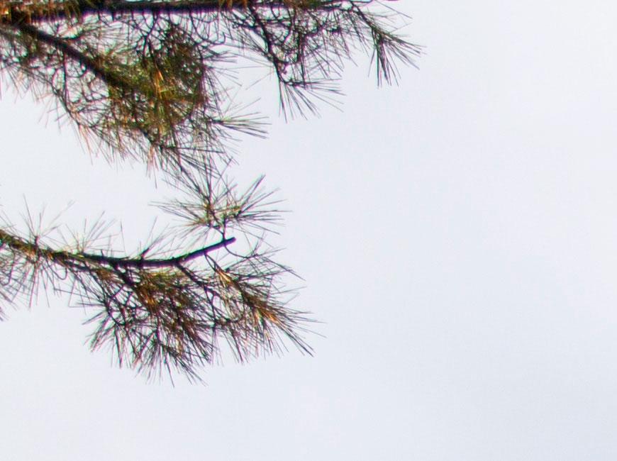 Crop 100%; reprodução de detalhes no canto do quadro; sinais de CA lateral.