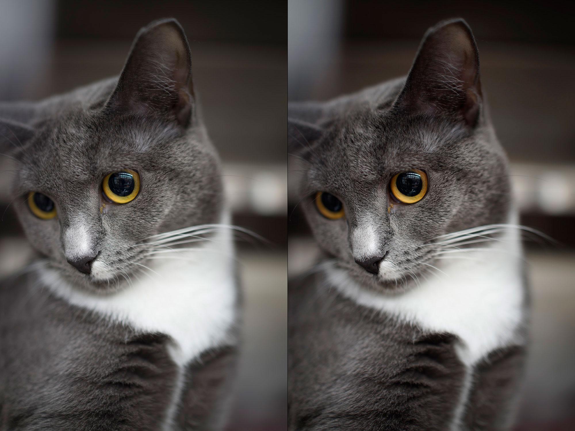 """""""Gato"""" em f/2 1/15 ISO100; RAW a esquerda e JPEG direto da câmera a direita."""