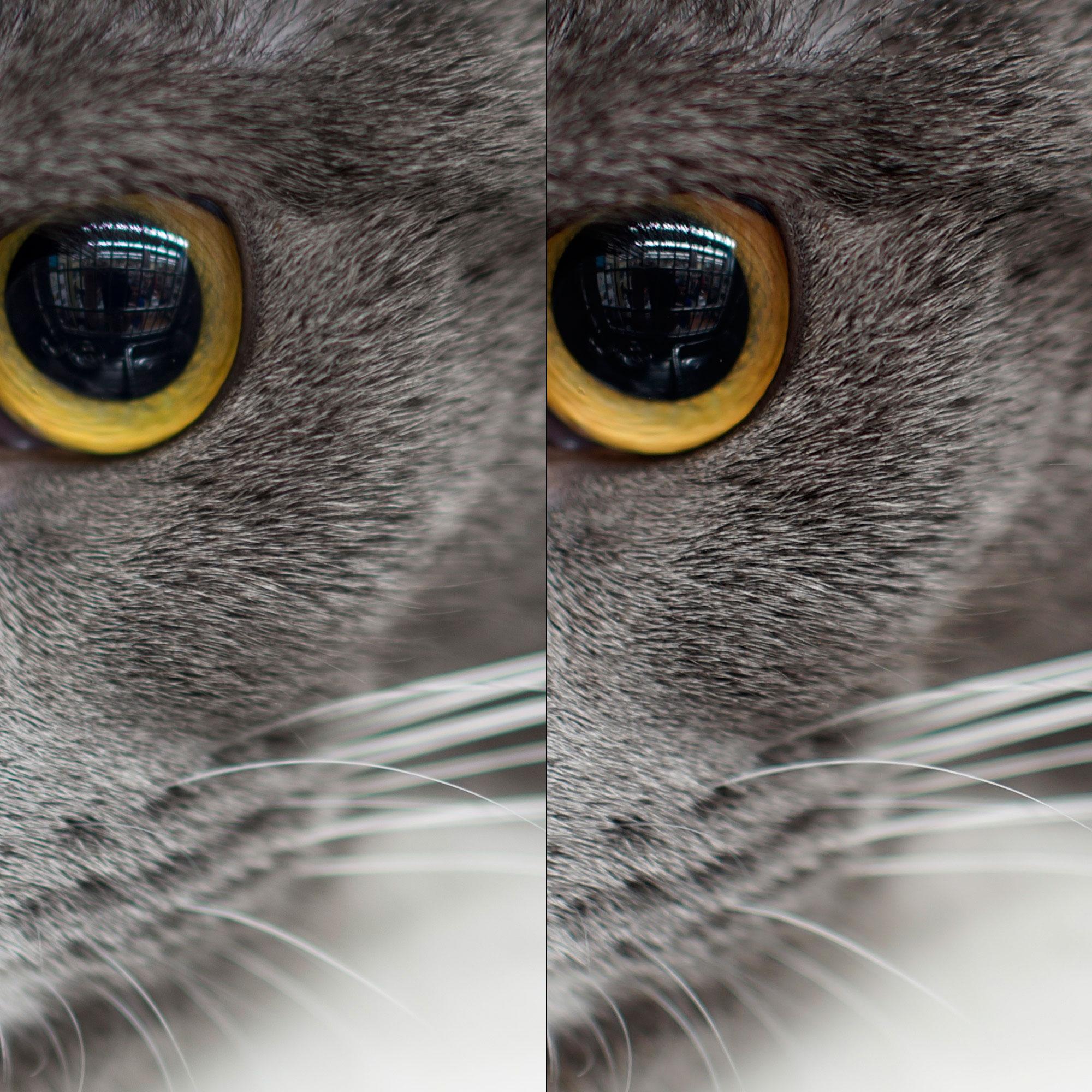 Crop 100%; arquivos JPEG saem detalhados depois do processamento por BIONZ.