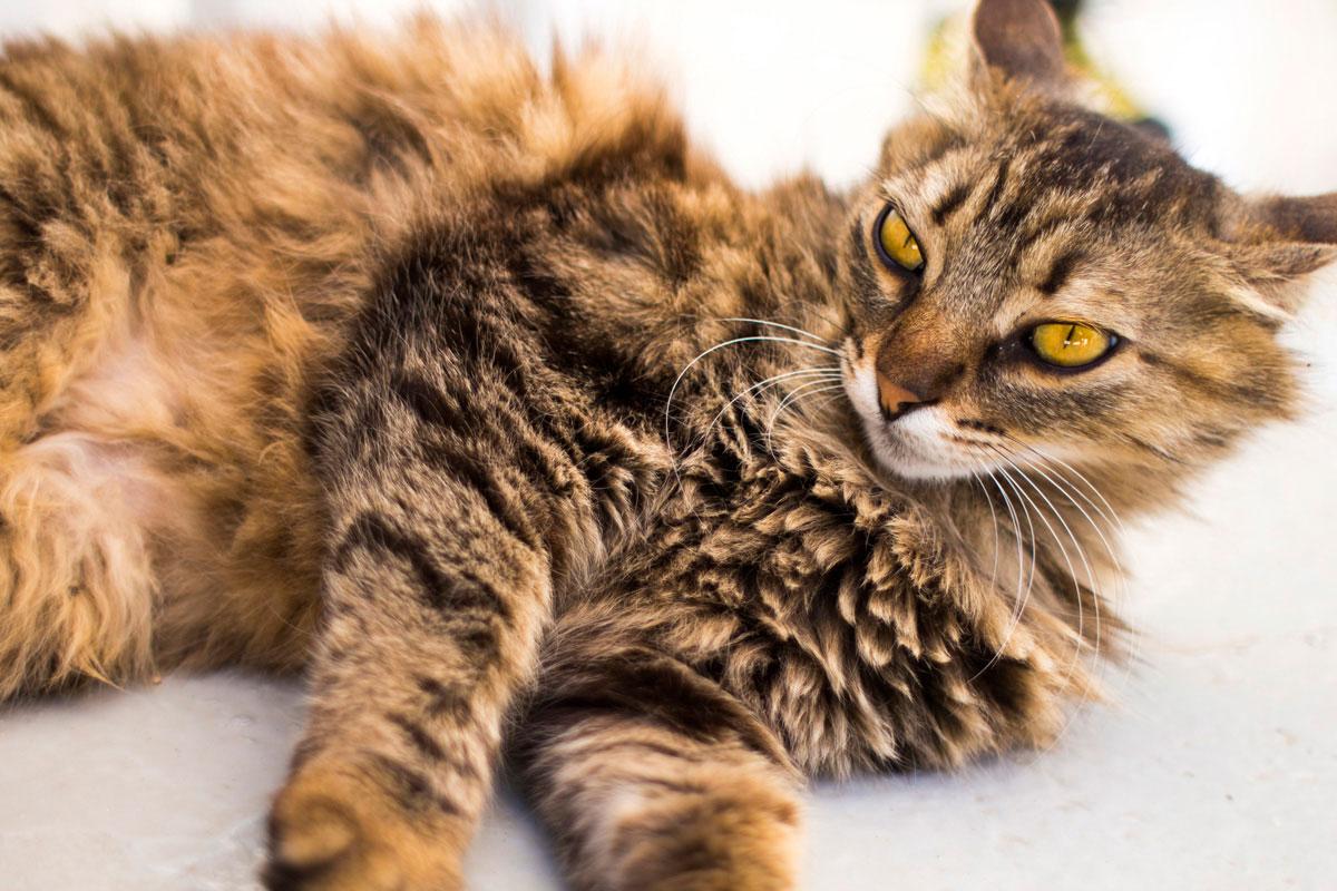 """""""Gato"""" com a EOS-M em f/1.8 1/750 ISO100. Download raw. http://www.blogdozack.com.br/RAW/EF28MMF18USM/IMG_1821.CR2"""