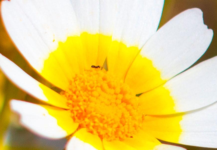 Crop 100%, detalhes está lá, notem as pernas da formiga.
