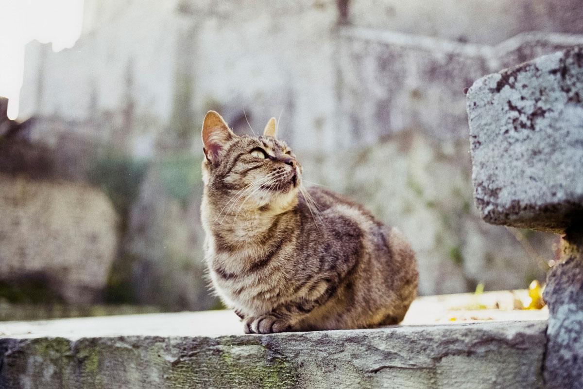 """""""Gato"""" com a EOS Elan 7E e Fuji Superia 200."""