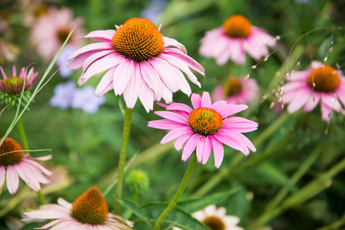 """""""Flores"""" em f/4 1/250 ISO400 @ 105mm; bokeh interessante para uma zoom."""