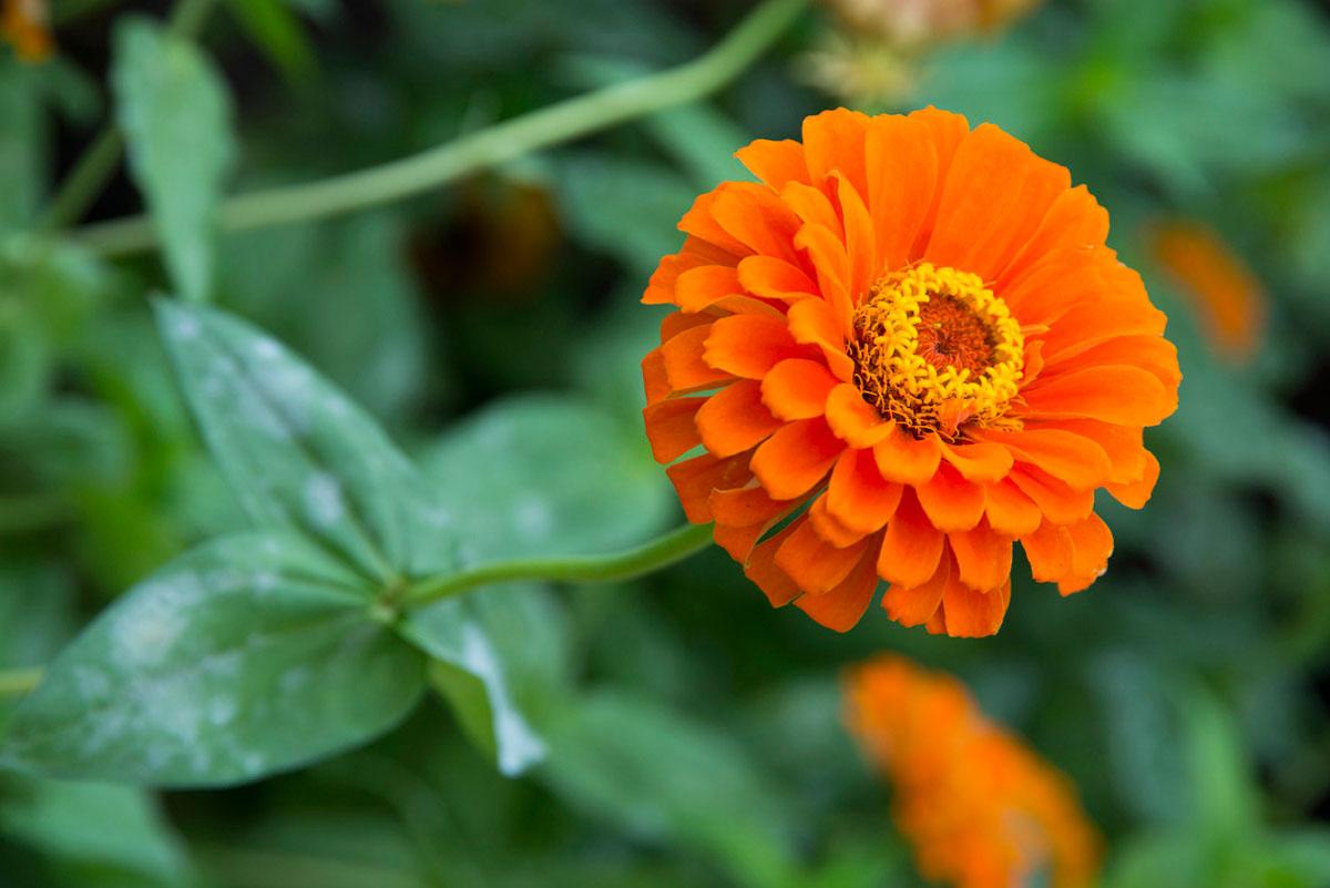 """""""Flor"""" em f/8 1/45 ISO400 @ 105mm; profundidade de campo continua curta em f/8."""