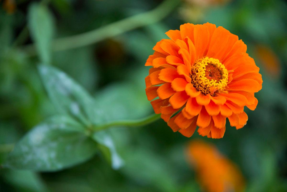 """""""Flor"""" em f/4 1/180 ISO400 @ 105mm; abertura máxima."""