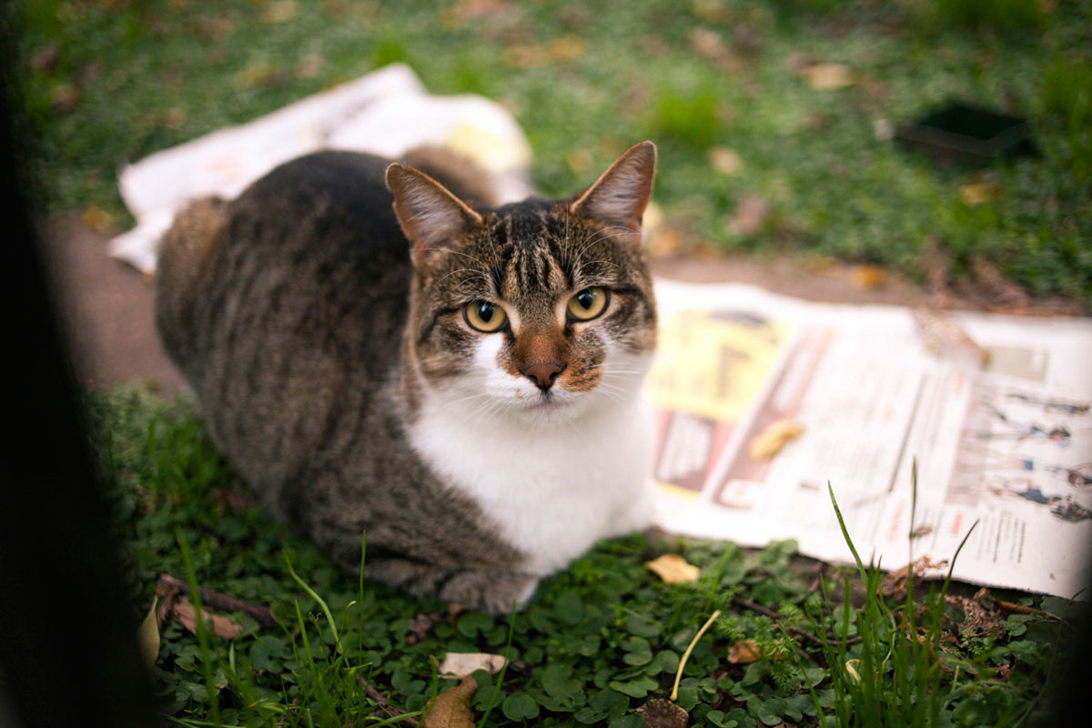 """Gato"" em f/2 1/250 ISO400; foco no nariz…"