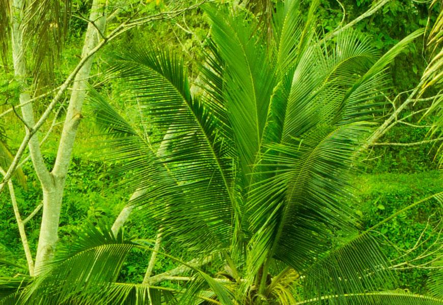Crop 100%, todas as folhas perfeitamente reproduzidas no digital.