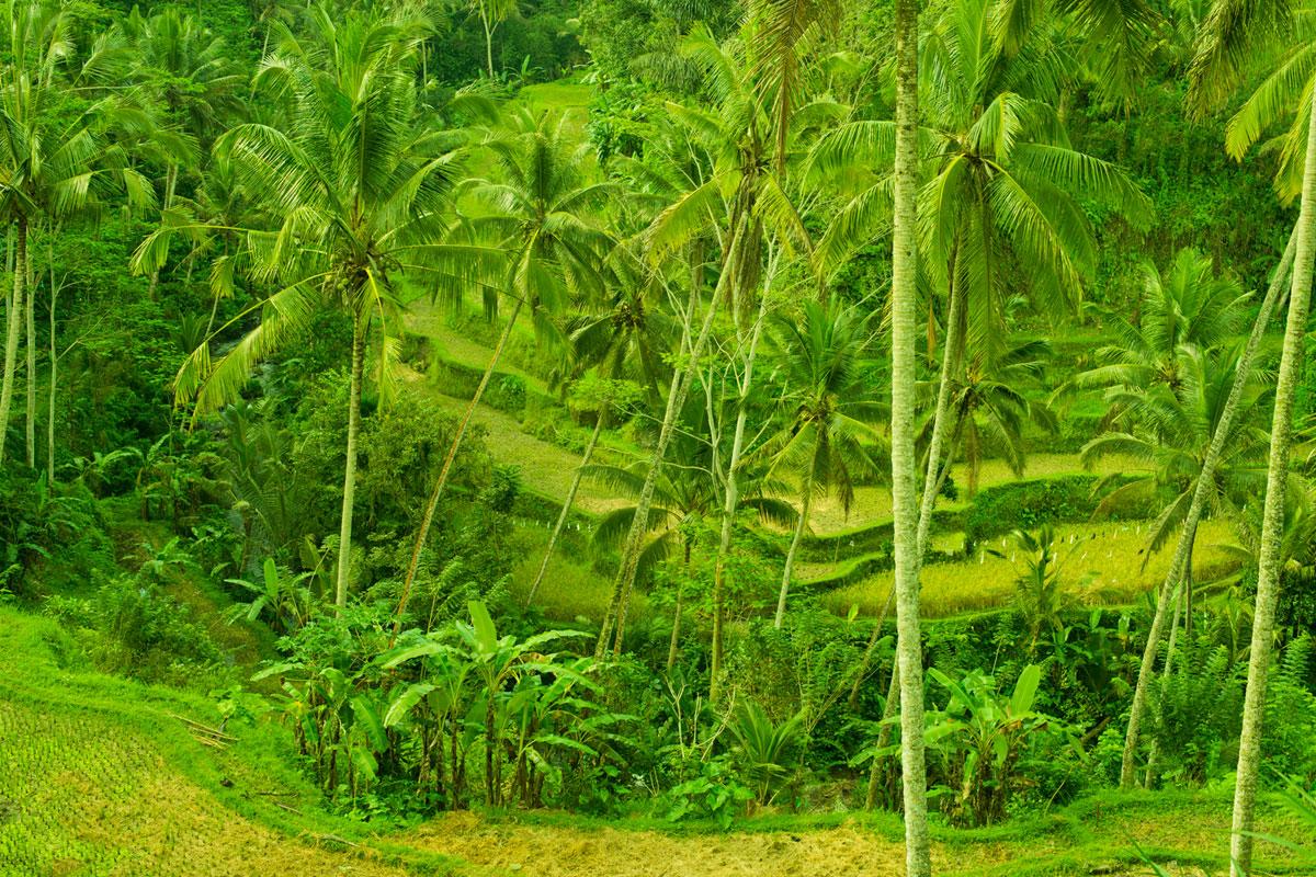 """""""Terraço de arroz"""" em f/8 1/100 ISO400."""