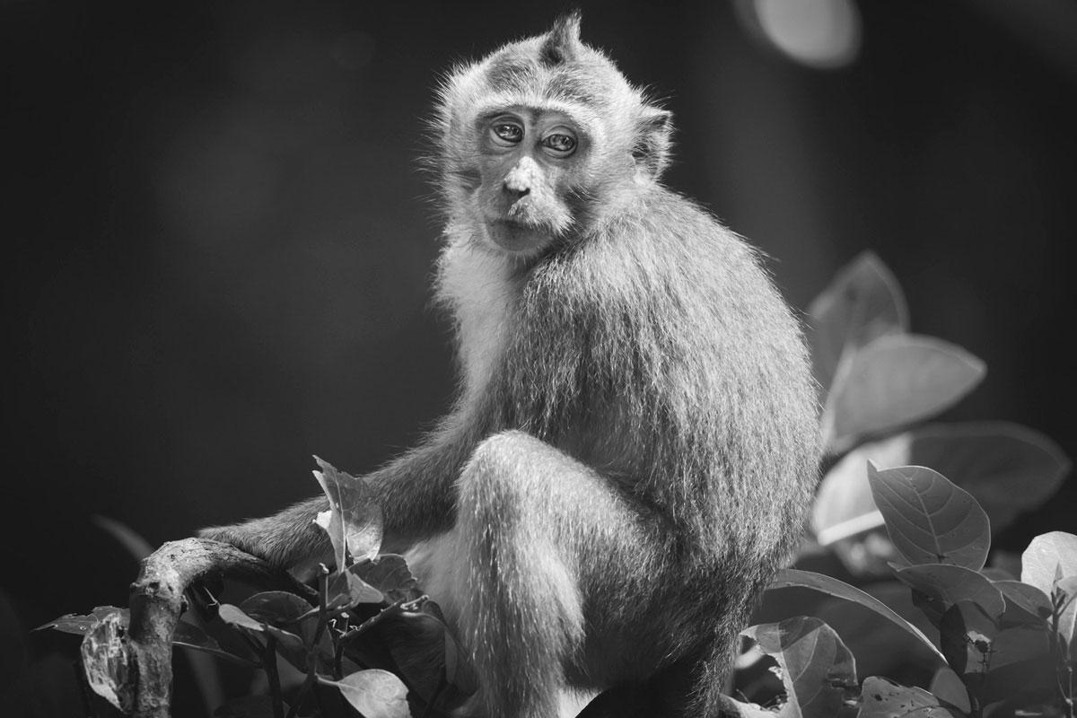 """Macaco I"" em f/5.6 1/500 ISO3200 @ 400mm."