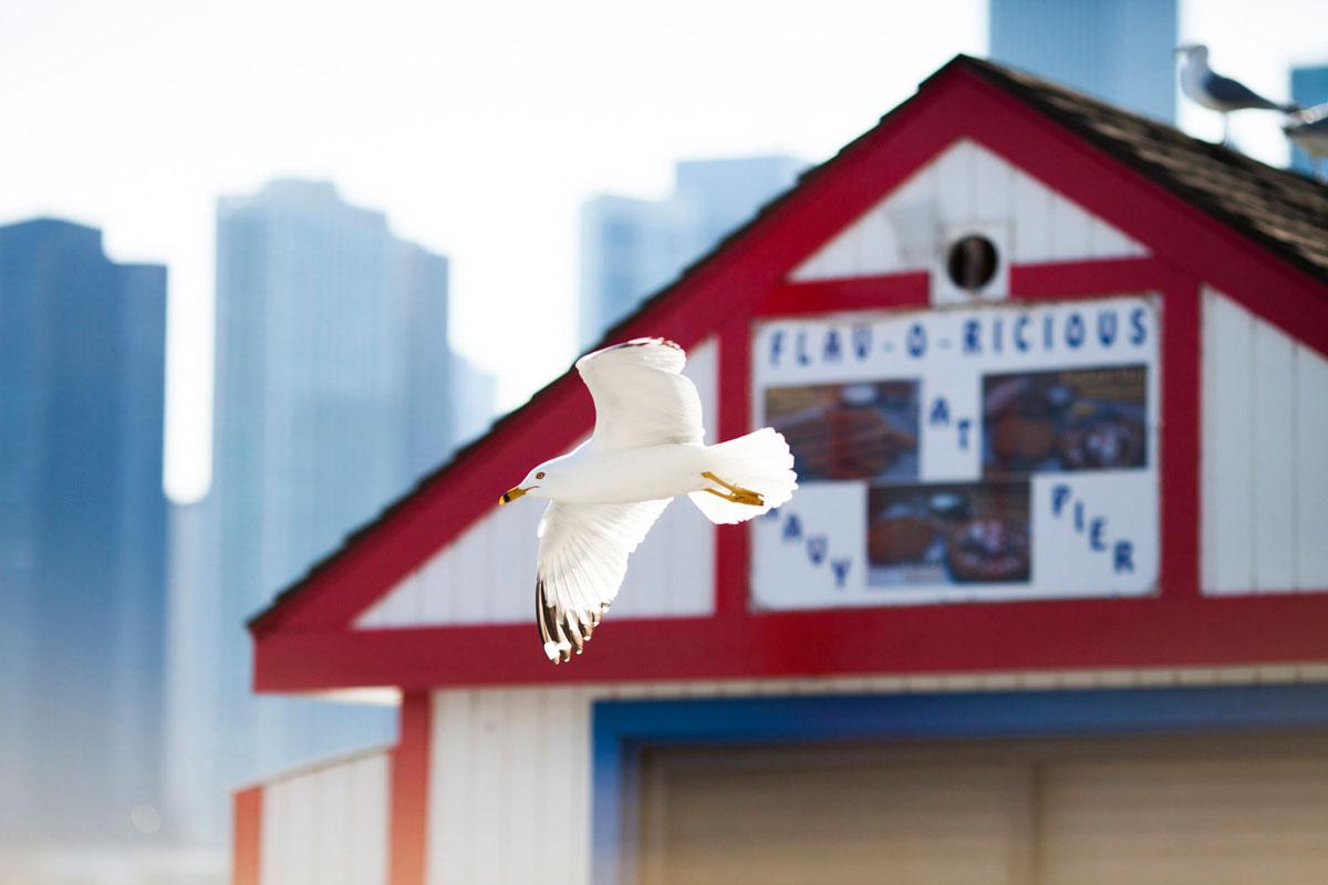 """""""Seagull"""" com a EOS 5D Mark II em f/2.5 1/8000 ISO320; AF é rápido para acertar o foco em qualquer objeto."""
