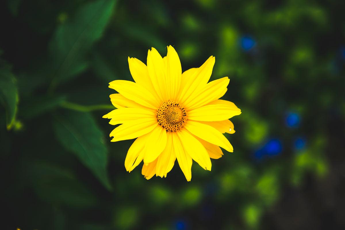 """""""Flor"""" em f/4 1/1000 ISO400 @ 120mm."""