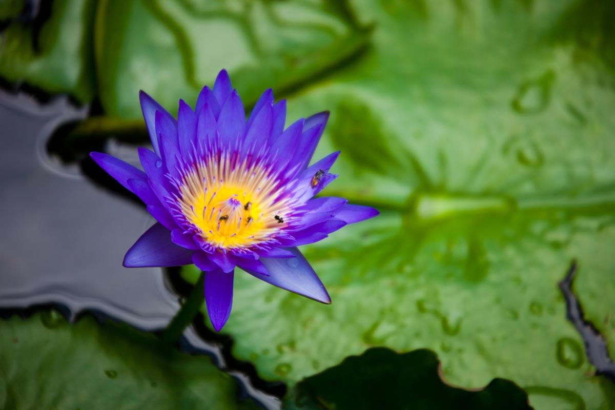 """""""Todas querem ser Lotus III"""" em f/5.6 1/250 ISO100 @ 300mm."""