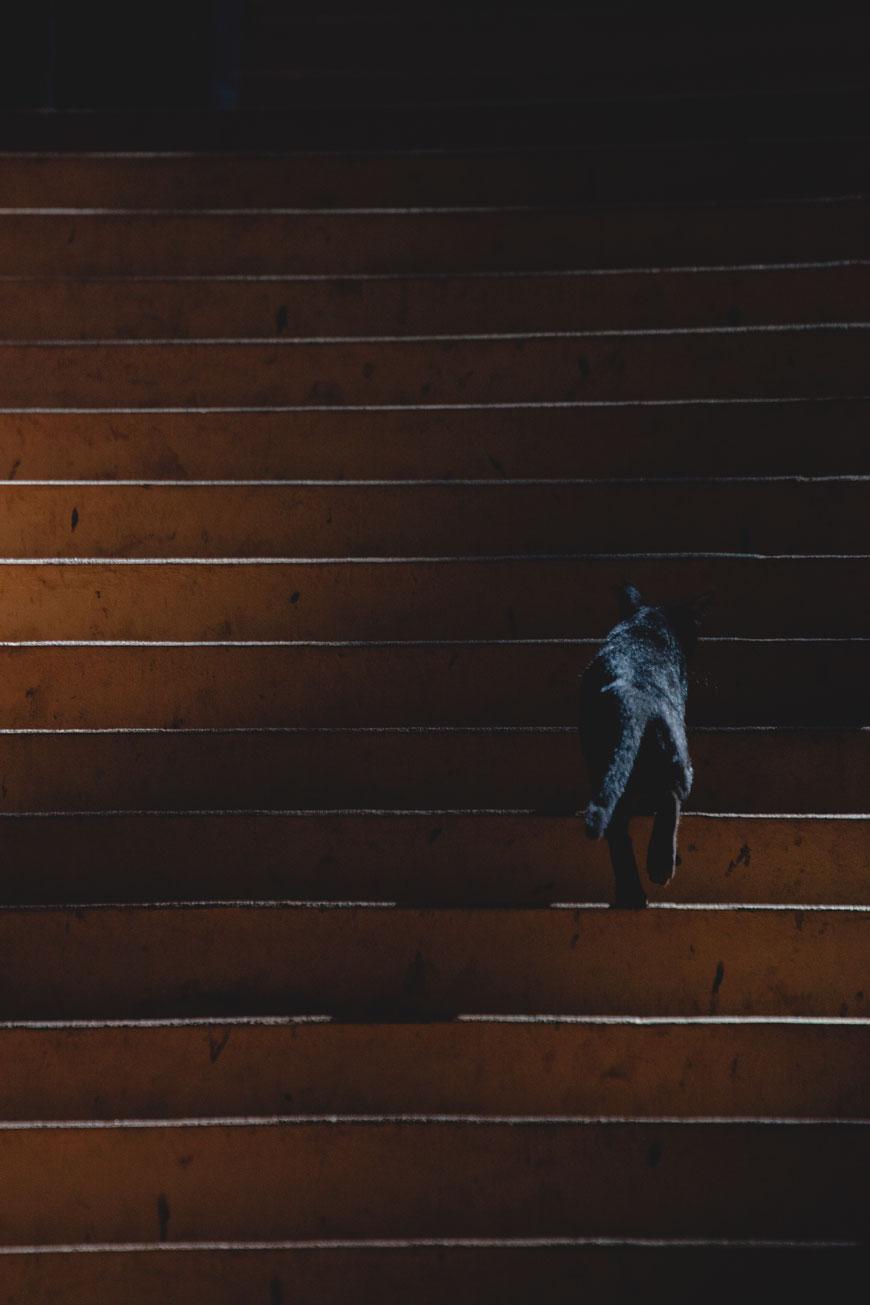 """Gato na escada"" em f/5.6 1/350 ISO3200 @ 300mm."