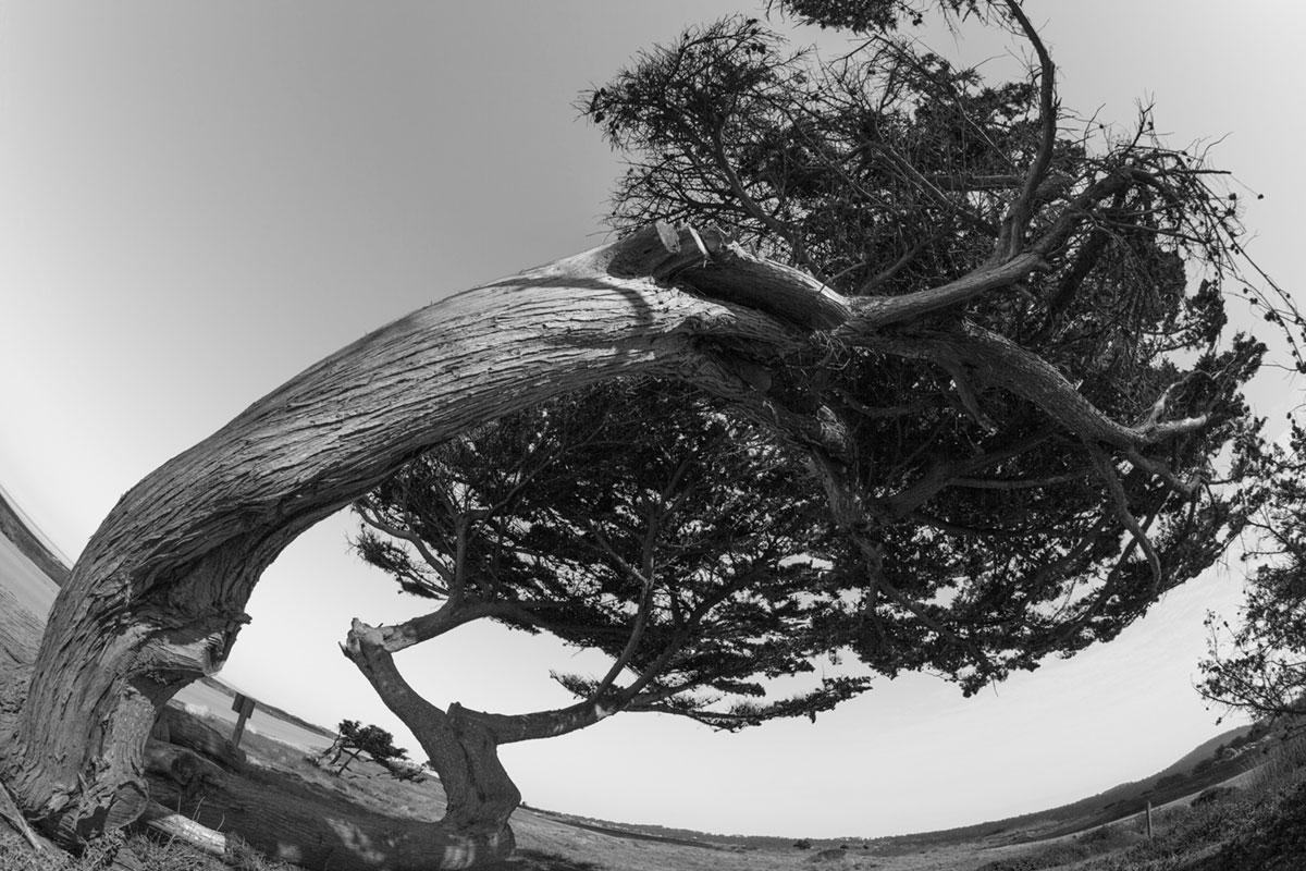 """""""Árvore"""" com a 5D Mark II em f/16 1/125 ISO100."""