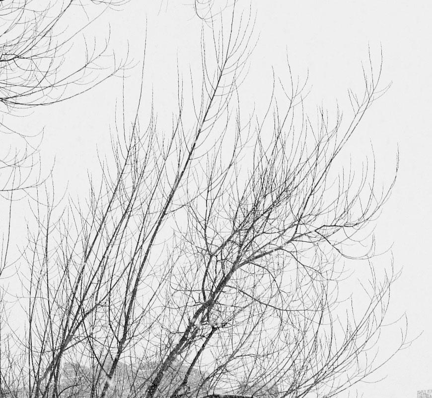 Crop 100%, são todos os detalhes nos galhos das árvores…