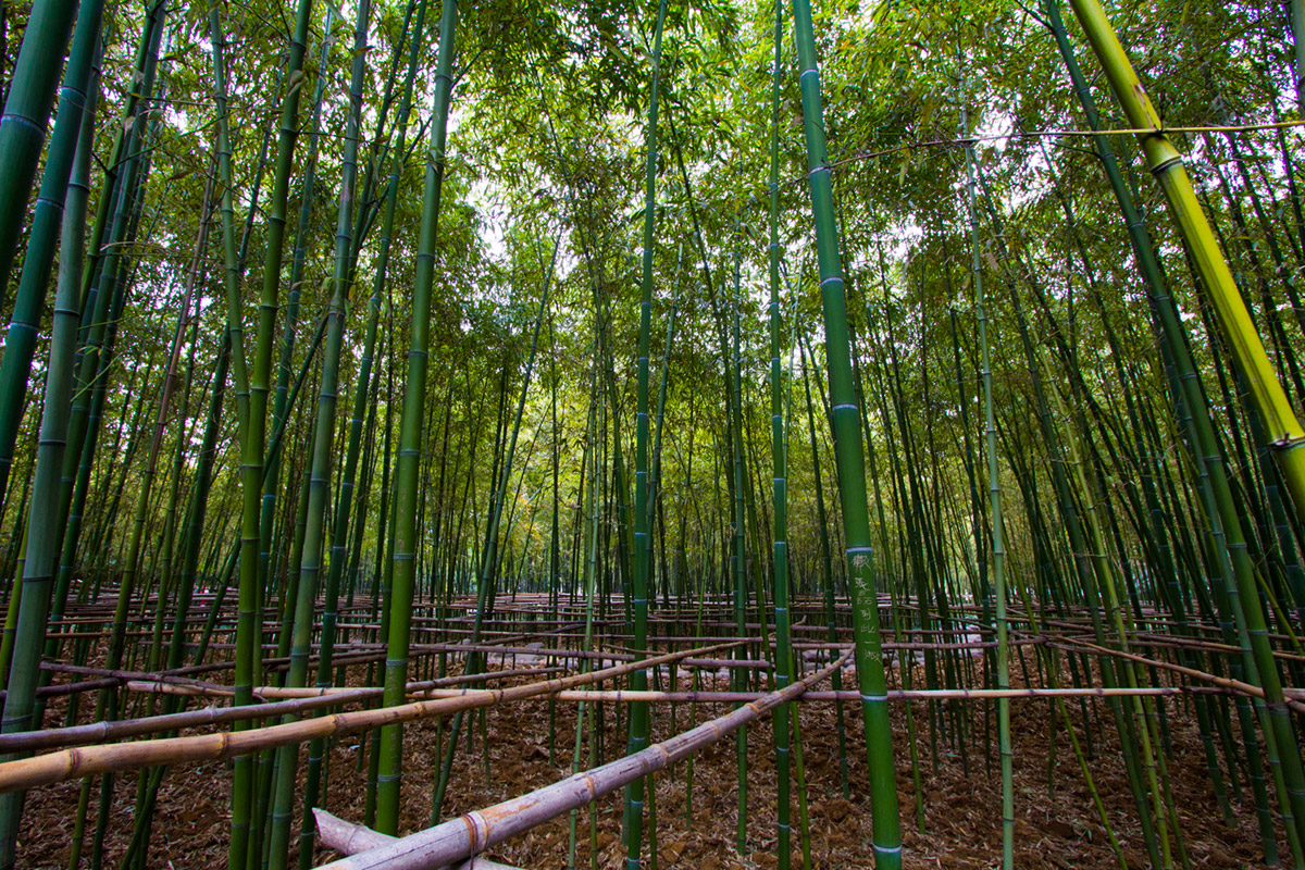 """Bambu"" em f/8 1/50 ISO800 @ 10mm."