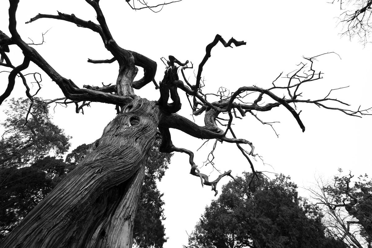 """""""Árvore"""" em f/8 1/160 ISO100 @ 10mm."""