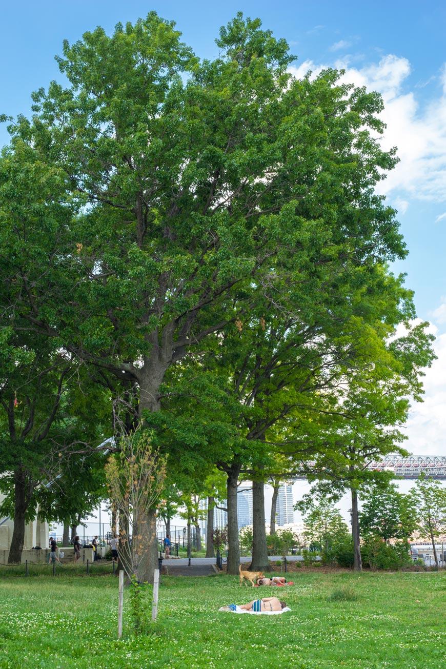 """""""Árvore"""" em f/14 1/60 ISO320."""