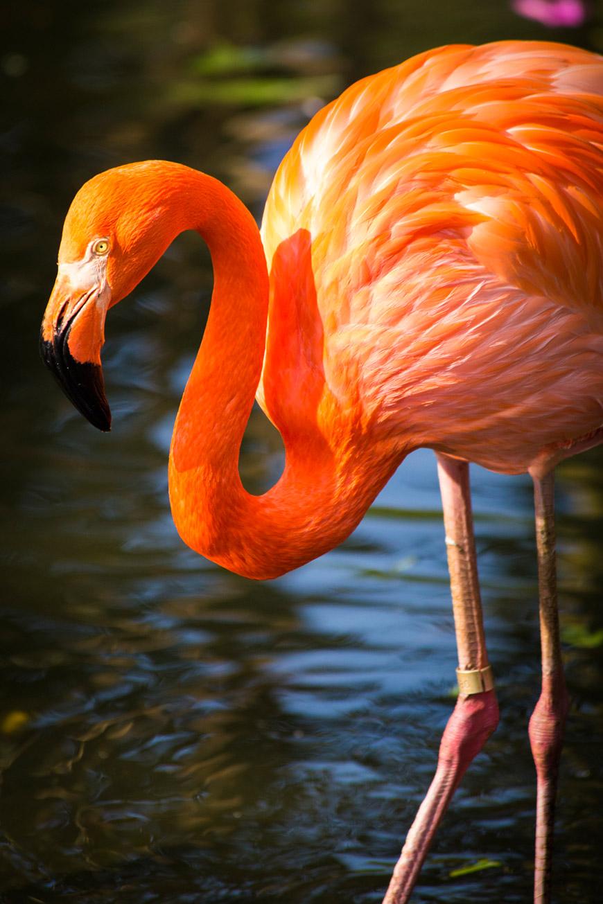 """""""Flamingo-rosa"""" at f/5.6 1/750 ISO800 @ 300mm."""