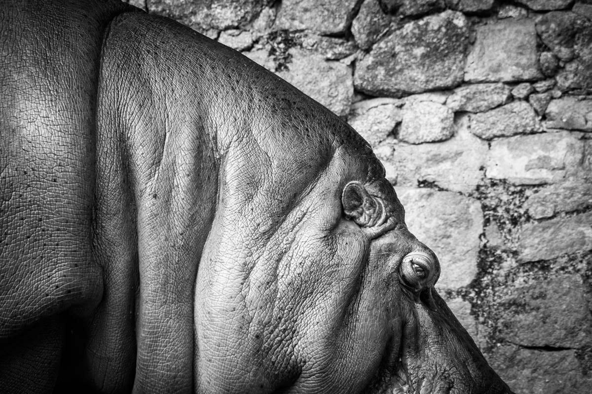 """""""Hipopótamo"""" em f/8 1/350 ISO1600 @ 300mm."""