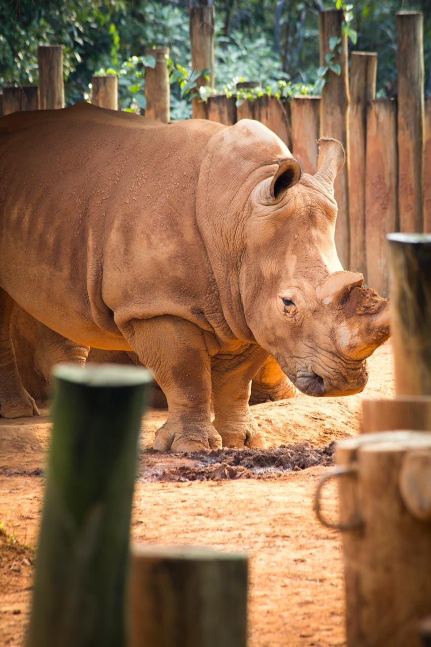 """""""Rinoceronte"""" em f/8 1/180 ISO800 @ 300mm; aparência do quadro a distância em f/8."""