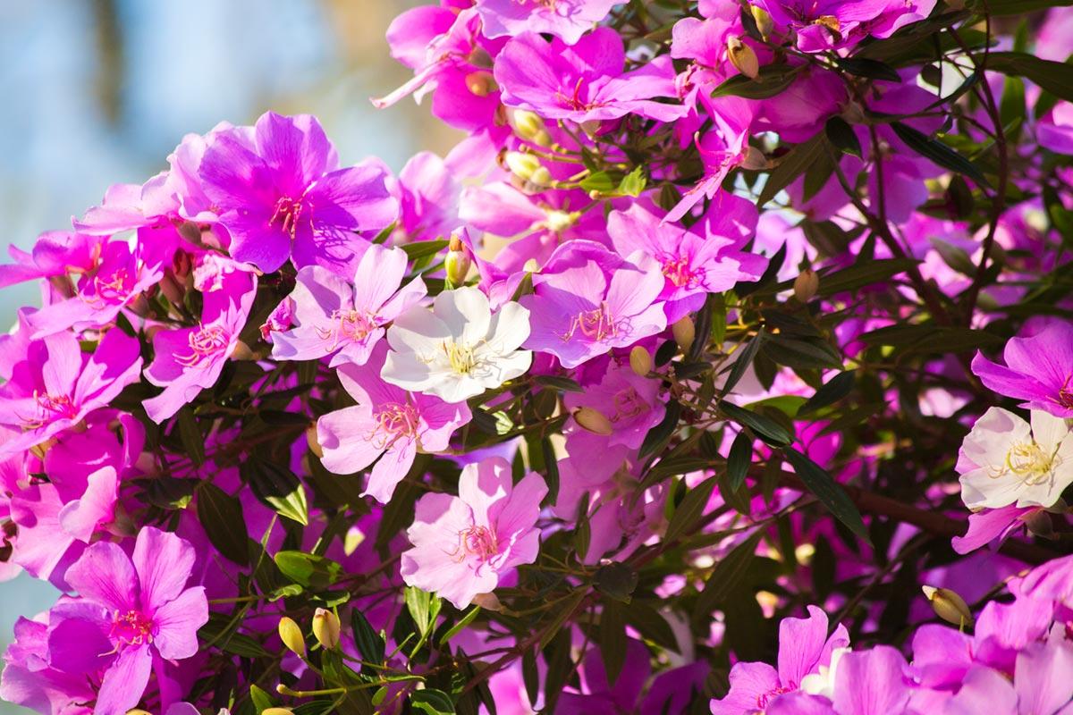 """Flores"" em f/5.6 1/1500 ISO800 @ 300mm."