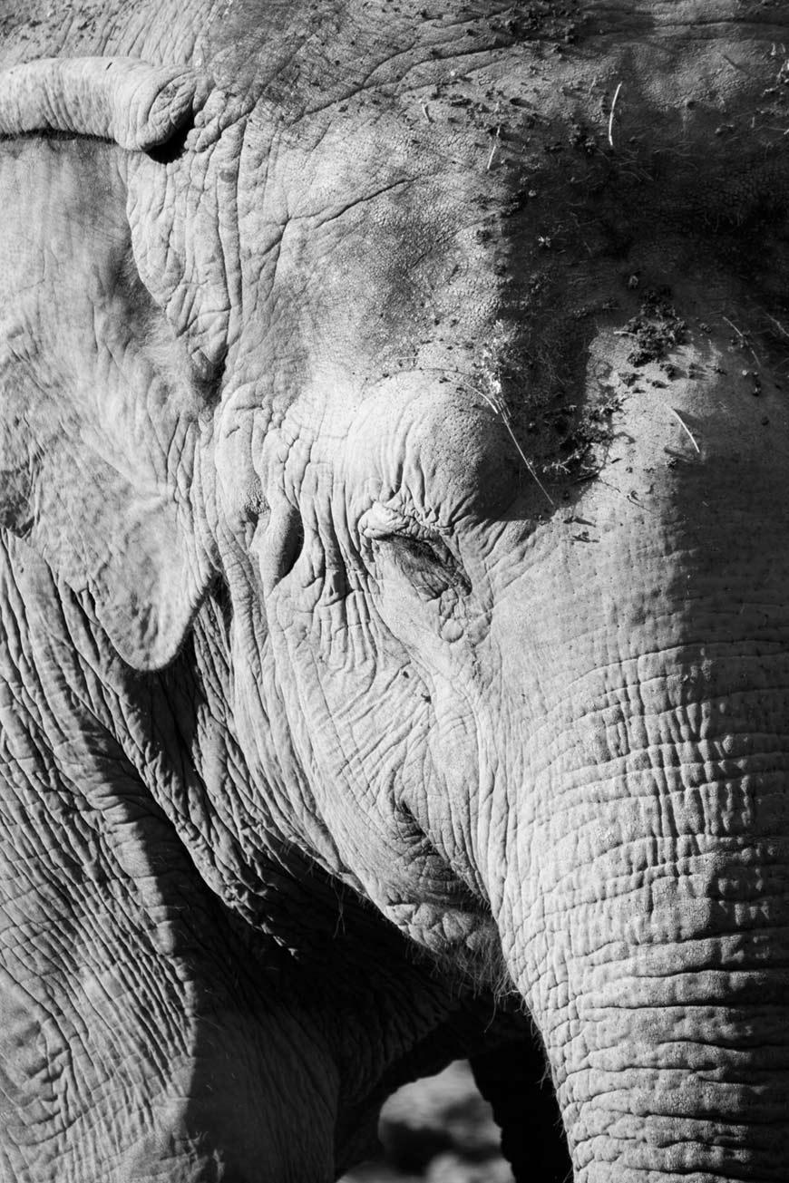 """""""Elefante"""" em f/5.6 1/350 ISO200 @ 300mm."""
