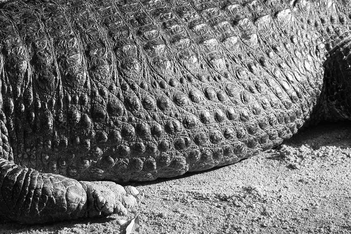 """Crocodilo"" em f/13 1/125 ISO800 @ 300mm."