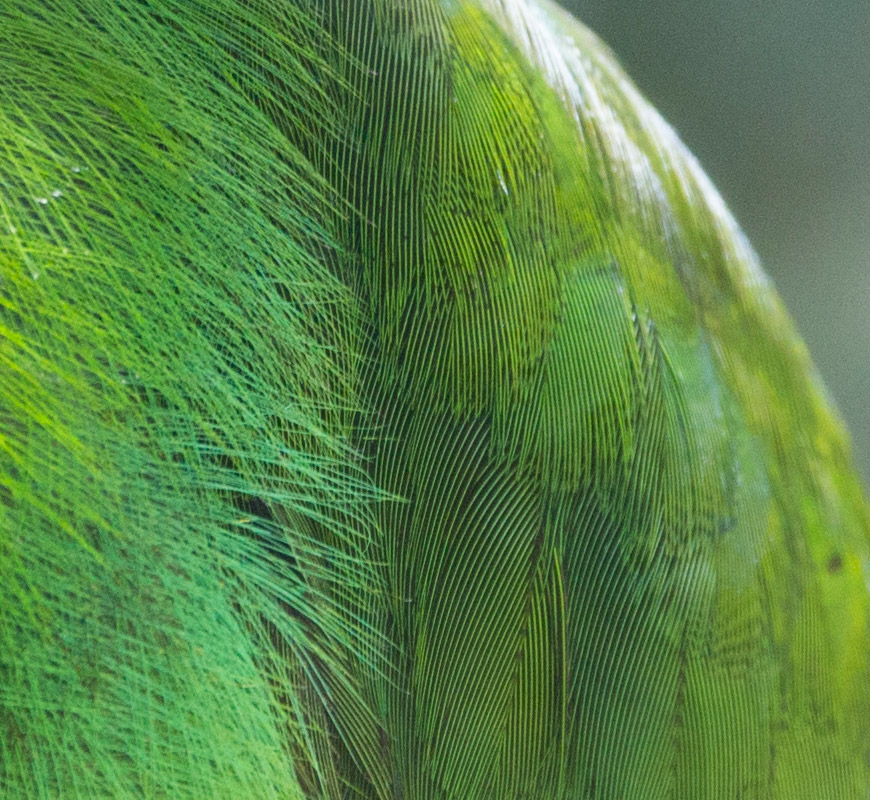 green bird feather