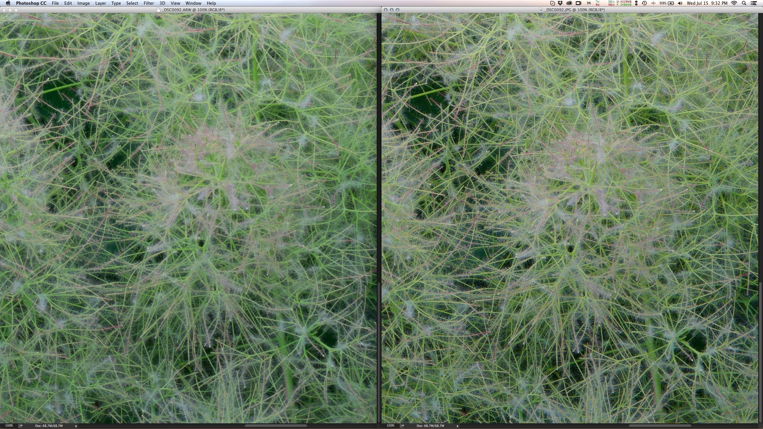 O processamento do BIONZ X (direita) ressalta os detalhes no default da A7II, que o raw via ACR precisa ser revelado.