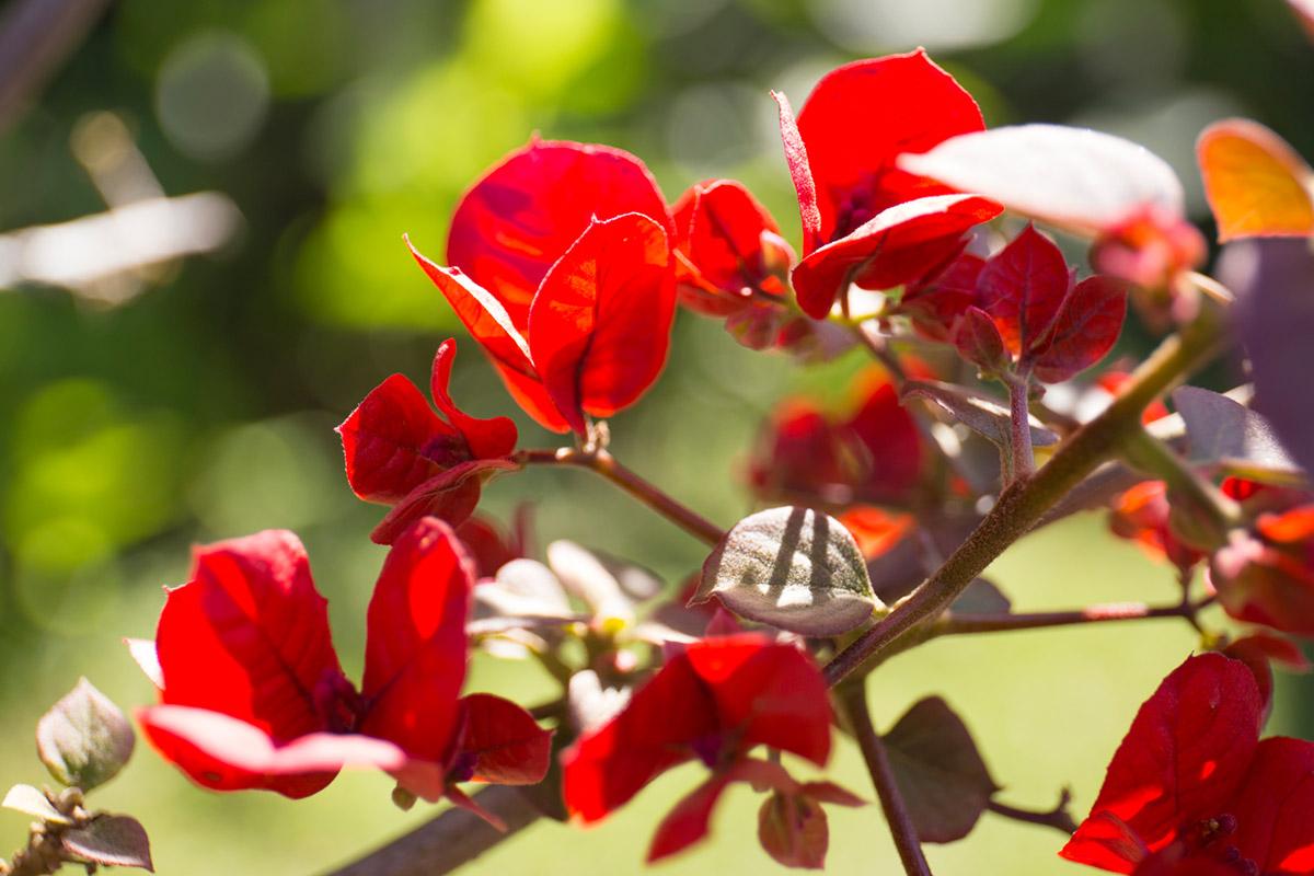 """""""Vermelho"""" em f/4 1/350 ISO400 @ 70mm."""