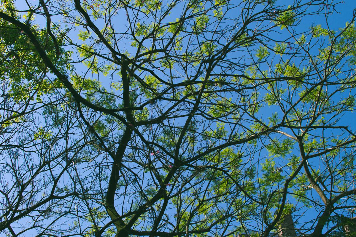 """Árvore II"" em f/4.5 1/1500 ISO200."