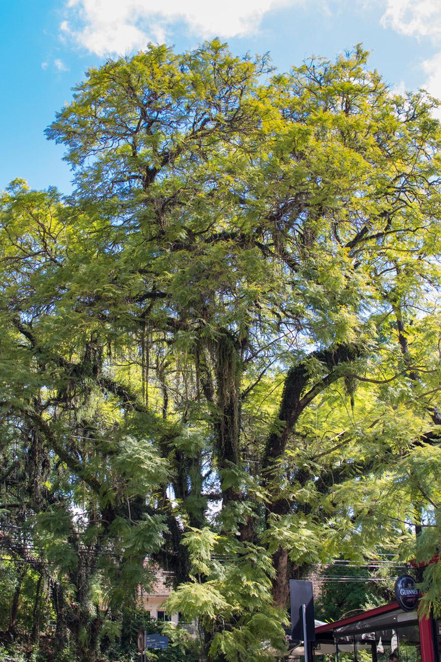 """""""Árvore"""" em f/3.5 1/180 ISO100."""