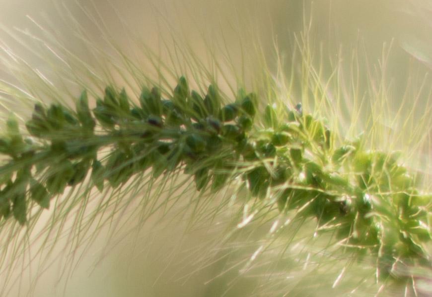 Crop 100%, o blooming continua com as outras standard de grande abertura da Nikkor.