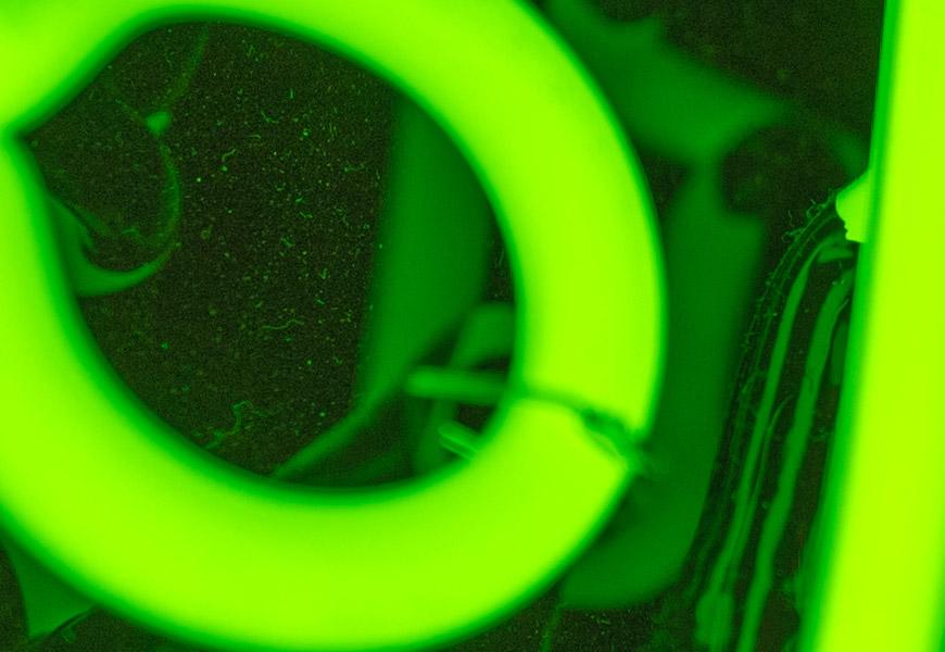 Crop 100%, de novo a poeira atrás do neon, nitidez impecável do f/1.8.