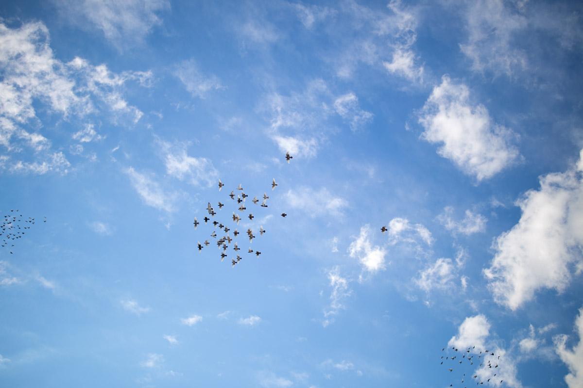 """""""Pigeons"""" em f/1.4 1/4000 ISO100."""