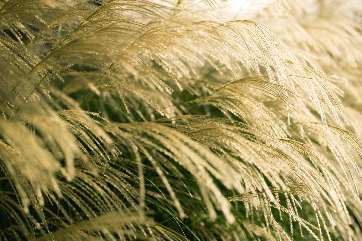 """""""Grass"""" em f/2 1/2000 ISO100."""