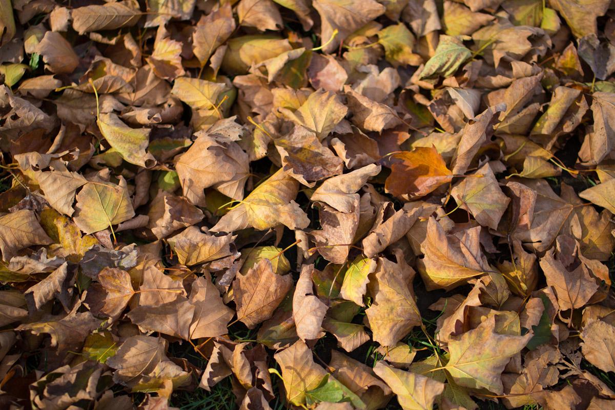 """Autumn"" em f/1.8 1/1250 ISO100."