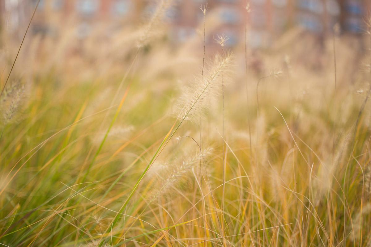 """""""Grass"""" em f/1.8 1/1000 ISO100."""