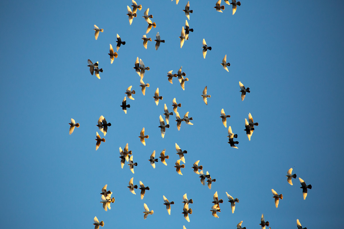 """Flock"" em f/5.6 1/2500 ISO800 @ 277mm; light vignetting wide open."