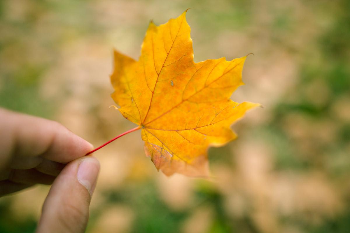 """""""Leaf II"""" em f/1.4 1/1000 ISO100."""