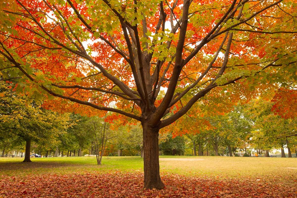 """""""Autumn"""" at f/8 1/125 ISO500."""