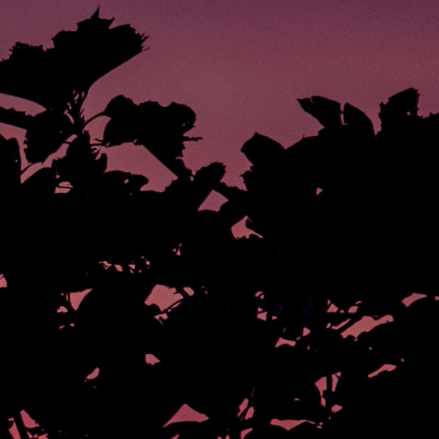 Crop 100%, mínimos detalhes de aberração cromática no contraste contra a luz.