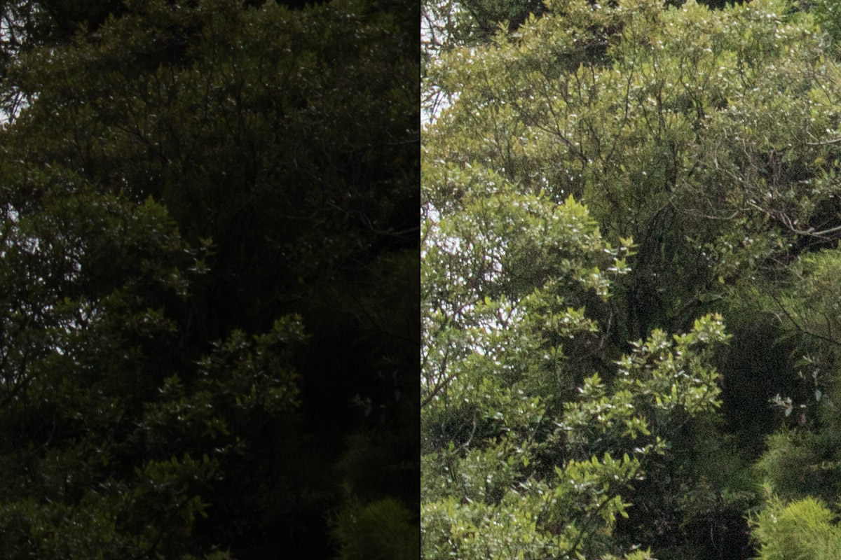 Crop 100%, até puxando +100 nas sombras não revela banding; uso deste sensor é flexível.