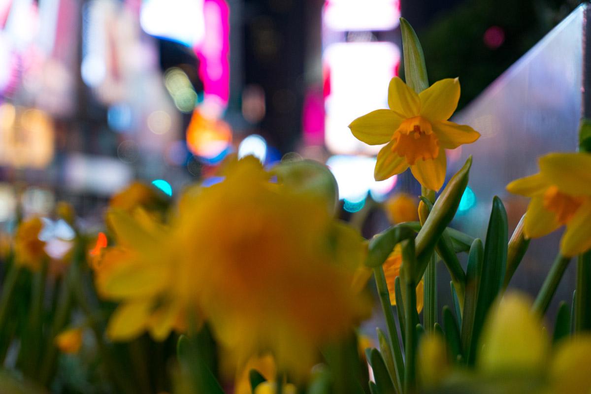 """""""Flor"""" em f/5.6 1/80 ISO800 @ 50mm; outra vantagem do sensor grande é a baixa profundidade de campo, além das cores em pouca luz."""