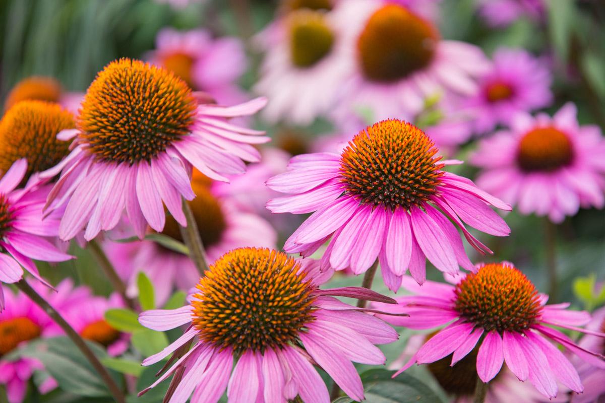 """""""Flores"""" em f/4 1/160 ISO100 @ 80mm; próximo da distância mínima de foco, bokeh suave a agradável."""