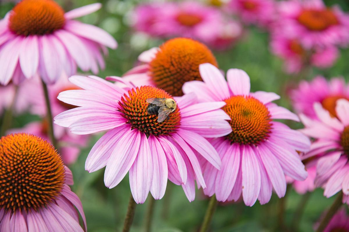 """""""Bumblebee"""" em f/4 1/250 ISO100 @ 80mm; distância mínima de foco."""