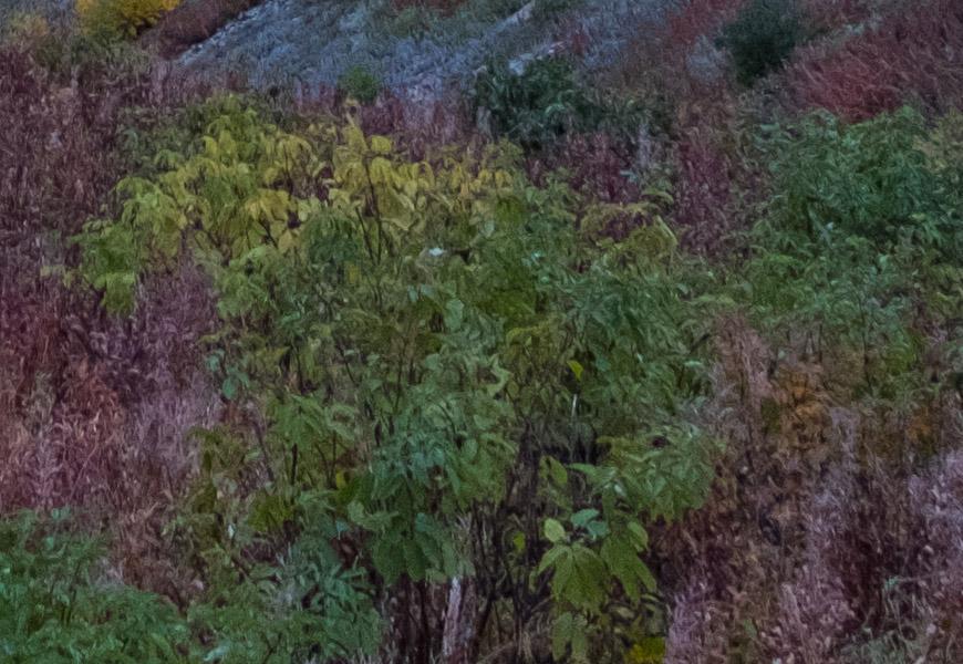 100% crop, novamente, mais a direita do quadro, em outra distância focal, e a imagem já perde bastante a nitidez.