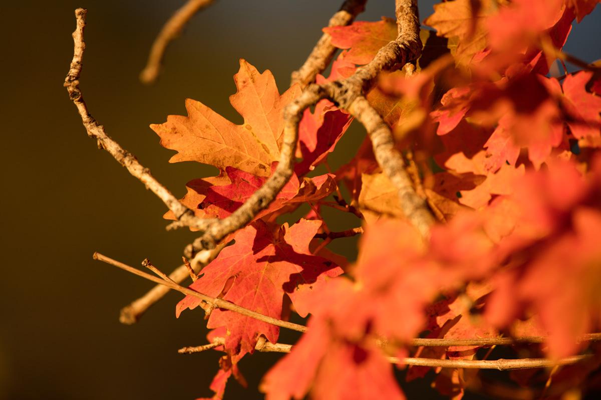 """""""Outono"""" em f/6.3 1/400 ISO100 @ 600mm; distância mínima de foco."""