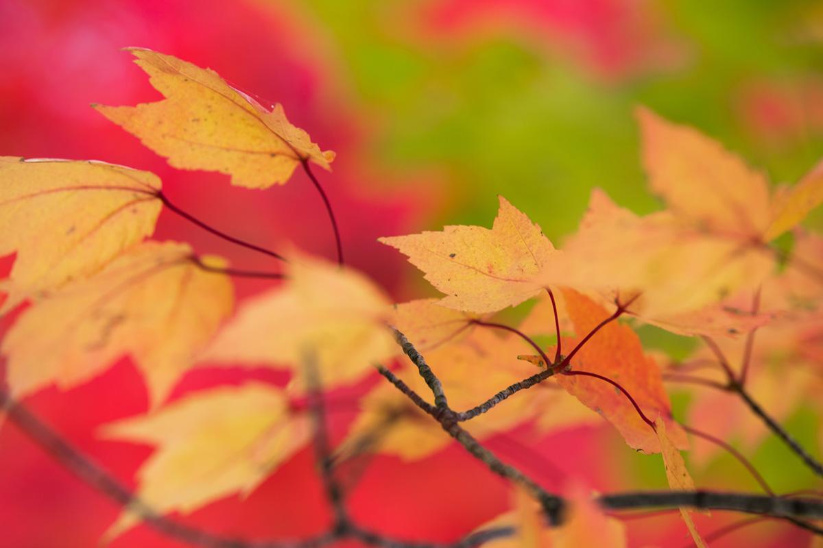 """""""Outono"""" at f/2.8 1/250 ISO160 @ 100mm; linhas difusas no primeiro e no segundo plano."""